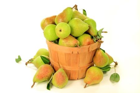 bushel: Fresh harvested pear in bushel and spilled around over white background