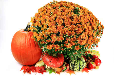 Decoration from Fruits  pumpkin, squashes, apples , Corn  ears of corn , Flowers  Chrysanthemum , Walnuts, Leaves with Fall colors isolated  over white background   Stock Photo