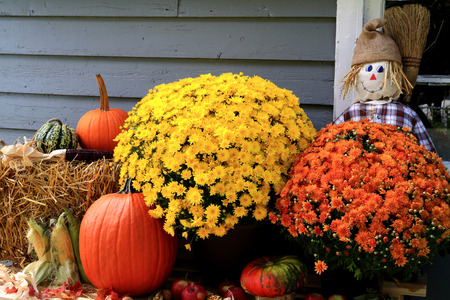 corn flower: Arrangement from Flowers, Bale of Hay, Pumpkin, Squashes, Apples, Maize, Scarecrow and dry leaves in front of Old Barn as decoration for Thanksgiving Day