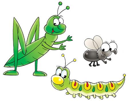 Grasshopper, caterpillar and fly photo