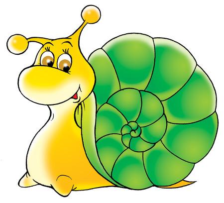 Garden snail photo