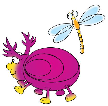 Bug and dragon-fly photo