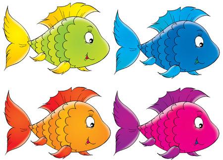 Coral fish photo