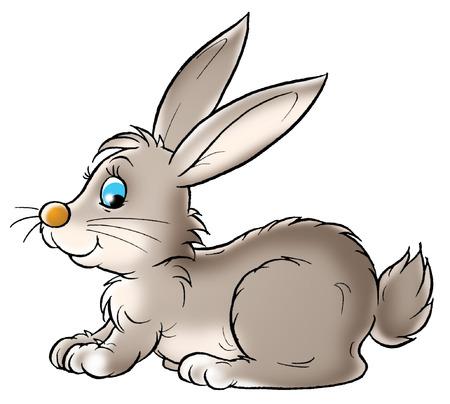 Rabbit Stock Photo - 1592648