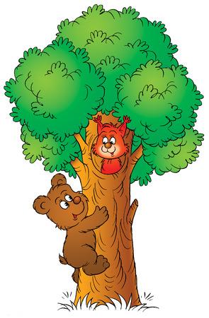 squirrel isolated: Bear y ardilla