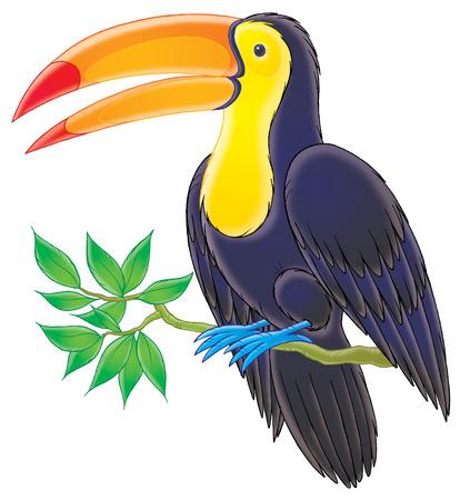 kiddish: Toucan