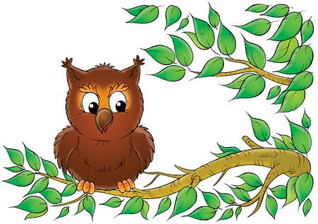 animated: owl