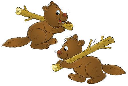 absurd: Beavers Stock Photo