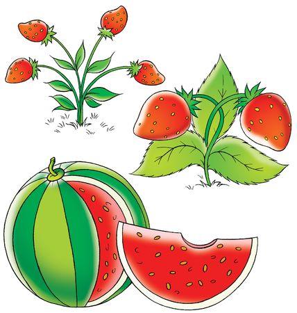kiddish: Fruits Stock Photo