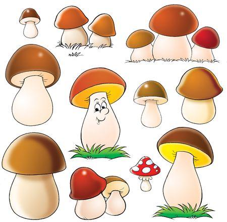 Mushrooms photo