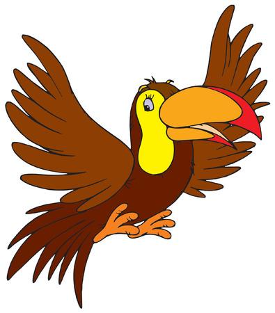 toucan: Toucan