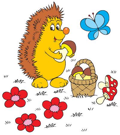 egel: Hedgehog