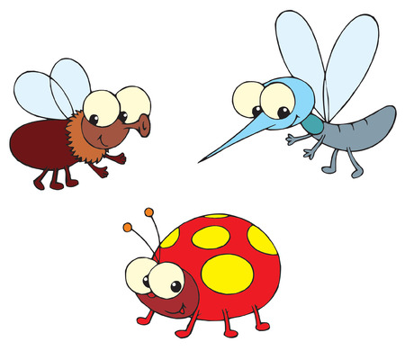 Ladybug, fly and mosquito  Vector