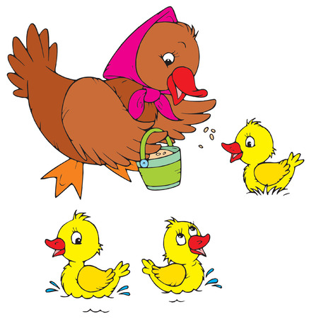 vector illustration  hen: Hen and Ducklings