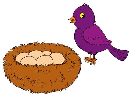 nido de pajaros: Nido  Vectores