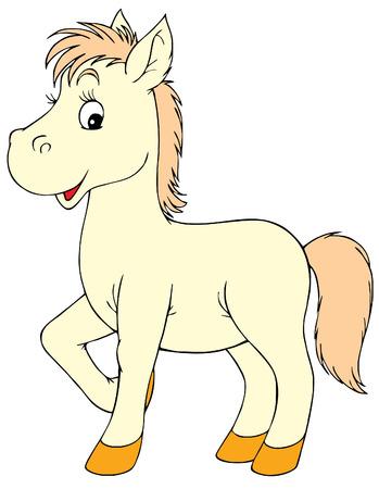 foal: Foal Illustration