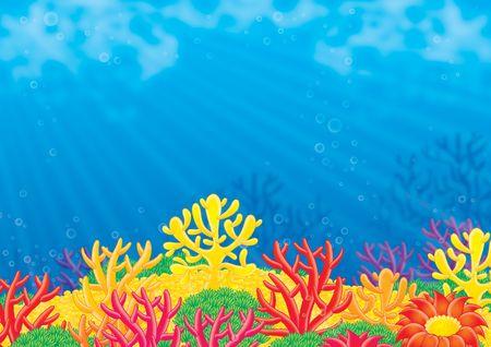 algas marinas: Mar de fondo  Foto de archivo
