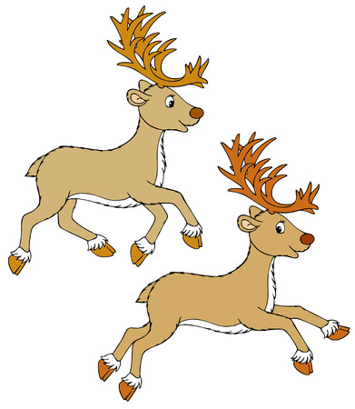 fawn: Reindeer