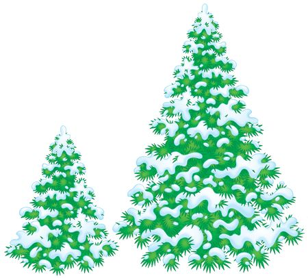 snowcovered: Snow-covered fir