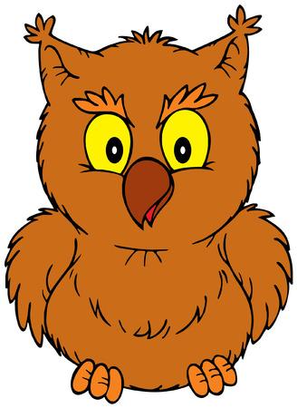 wildlife: Owl Illustration