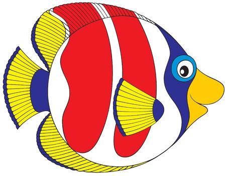 coral fish: Coral fish