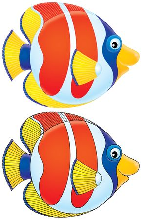 Coral fish (black and color contours)