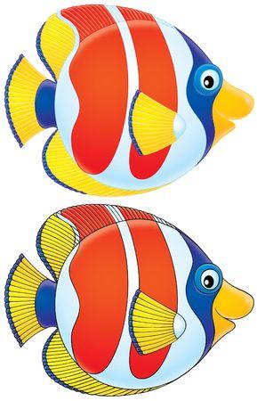 Coral fish (black and color contours) photo