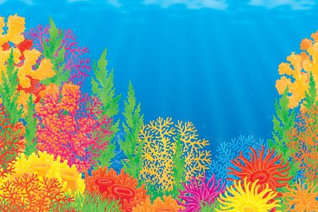 fond marin: Coral reef