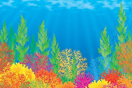 actinia: De los arrecifes de coral