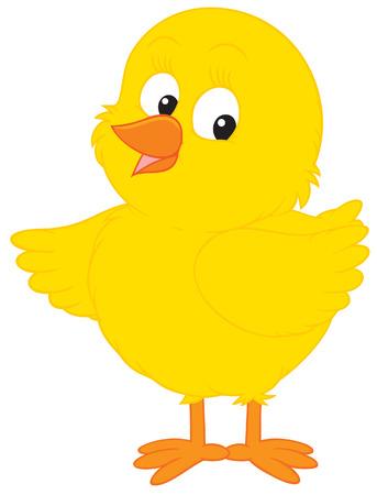 affable: Little Chick Illustration