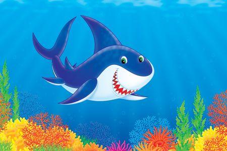 Shark Stock Photo - 5091972