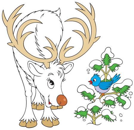 horny: Reindeer and bird