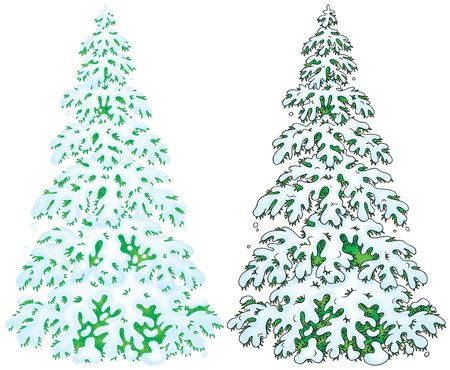 snowcovered: Two illustrations of snow-covered fir with color and black contours
