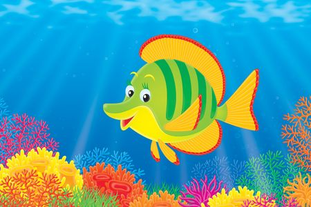 green algae: Coral Fish