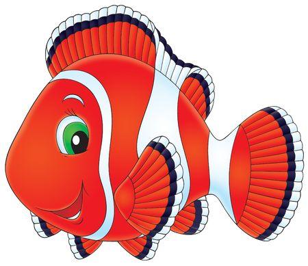 Anemonefish Stock Photo - 6526713