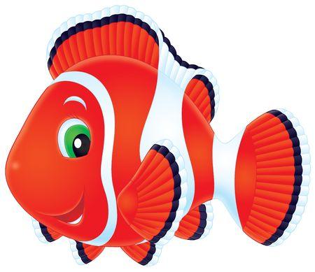 anemonefish: Anemonefish Stock Photo
