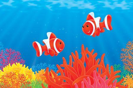 actinia: Anemone peces nadando en un lindeniana rojo  LANG_EVOIMAGES