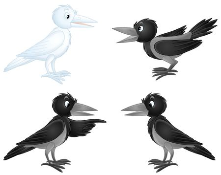 White crow and black crows photo