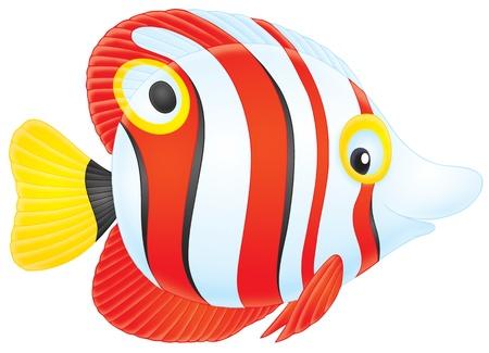 Tropical fish Stock Photo - 8560897