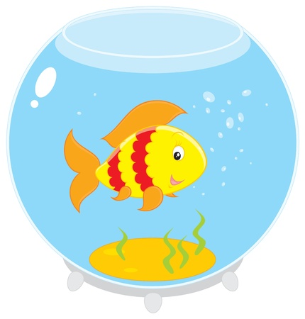 aquarian: Fish in an aquarium