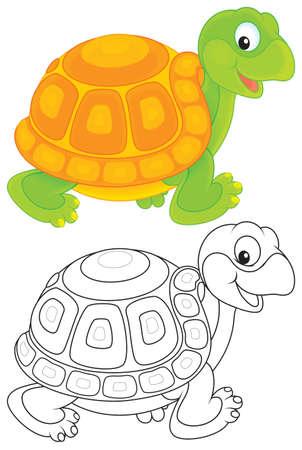 tortuga de caricatura: tortuga