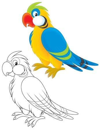 tropical bird: Parrot