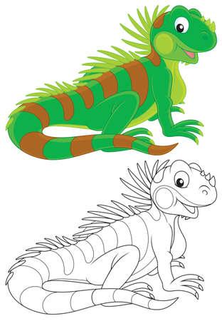 l�zard: Iguane