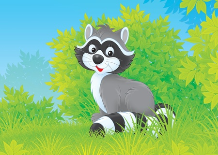 racoon: Little coon sitting on green grass in a forest Stock Photo