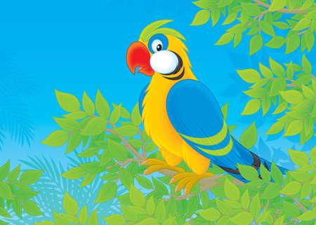 popinjay: Parrot in jungle Stock Photo