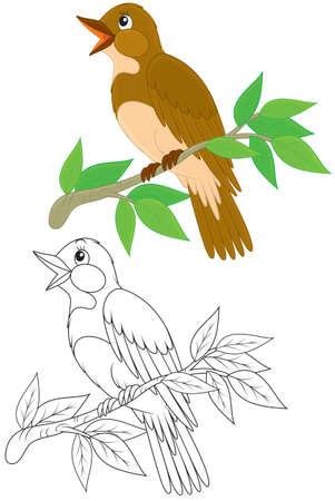 bird nightingale: nightingale Illustration