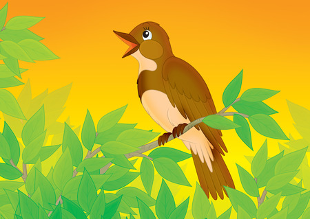 songster: Singing nightingale  Stock Photo