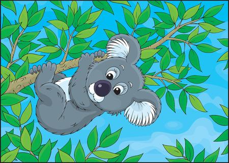 Grey koala hanging on an eucalyptus branch Stock Vector - 23019753