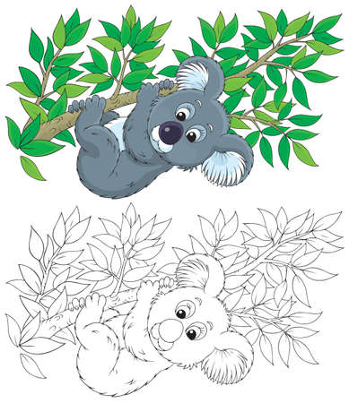 koala bear hanging on an eucalyptus branch Vector