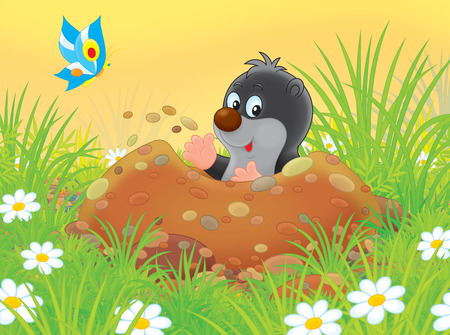 burrow: mole digging a burrow among grass on a glade Stock Photo
